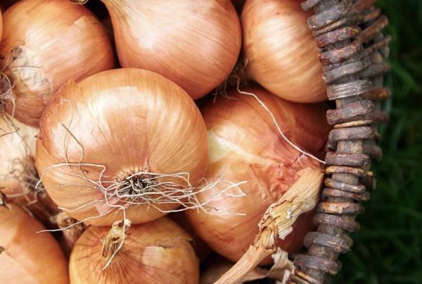 remedio casero de cebolla para el reuma