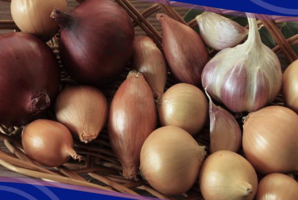 resumen del mercado europeo de cebolla